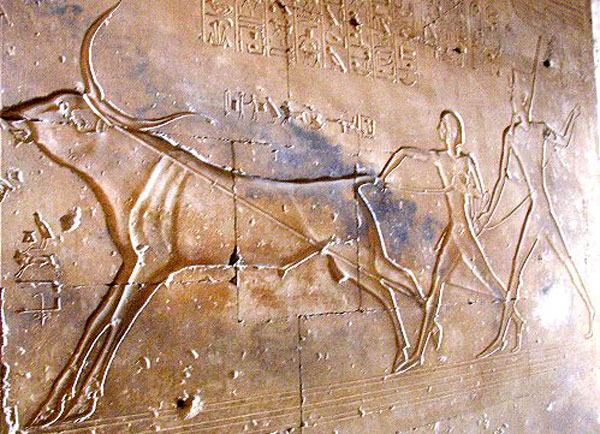 Abydos chasse taureau 1