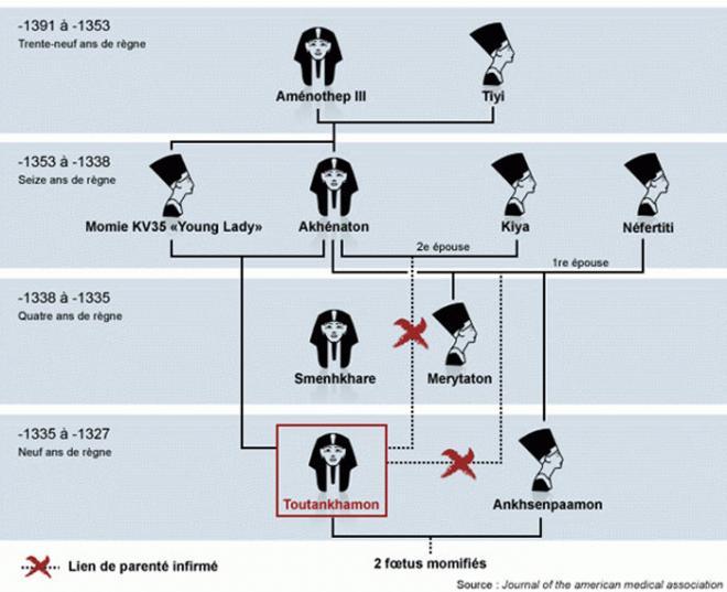 Arbre genealogique resultant des dernieres etudes con