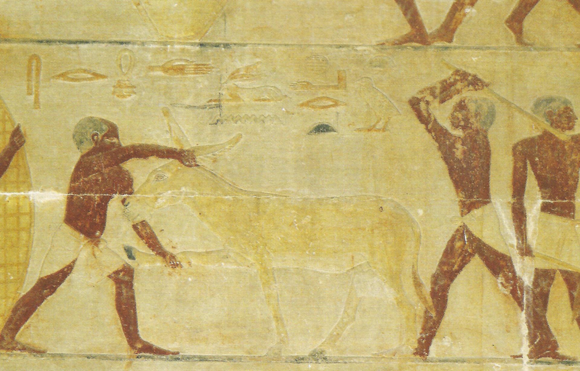Dans la kemet antique l ane fut bien mal aime considere comme malefique