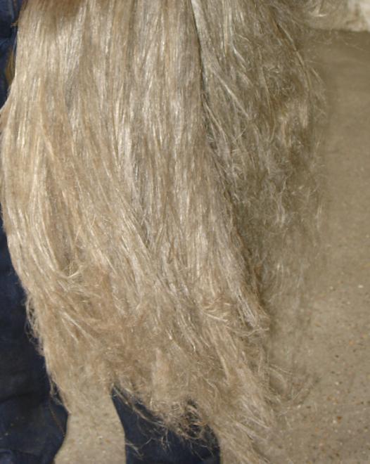 Lin teille de longues fibres extraitent des pailles