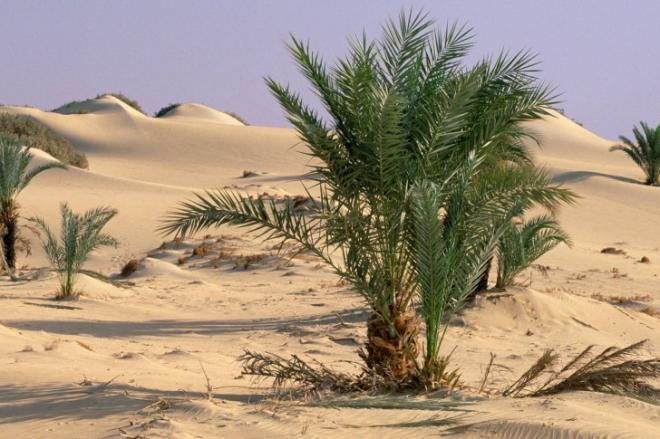 Oasis dakhla sahara