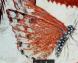 Papillon tombe de nebamon tt 147
