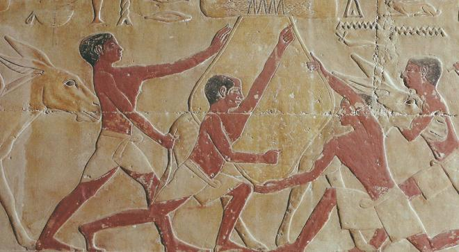 Scene agricole dans un mastaba de l ancien empire a saqqarah des paysans attachent un fardeau sur un ane