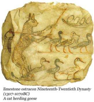 CHAT du Nil, une coévolution qui a rendu le chat plus intelligent ... ?