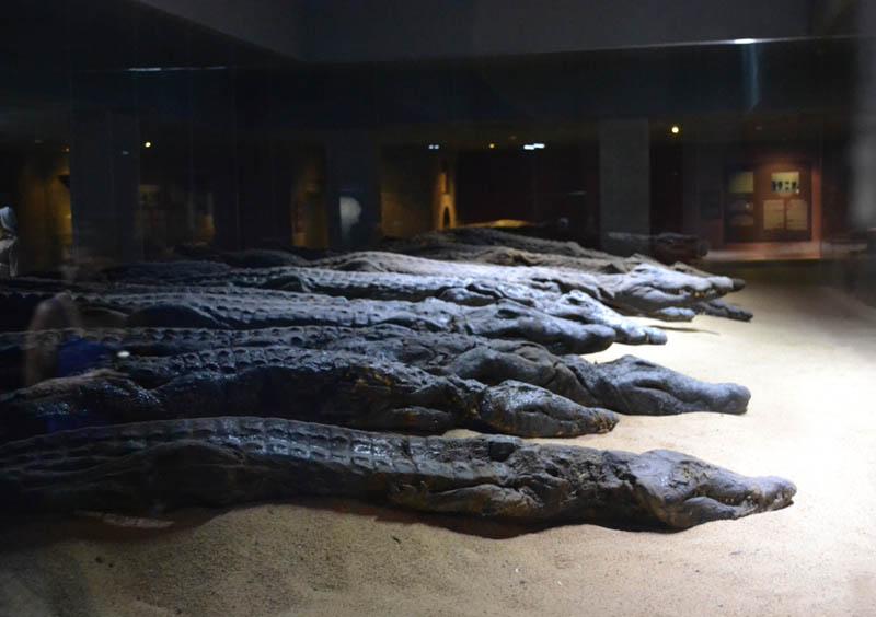 Le Musée de crocodile de Kom Ombo
