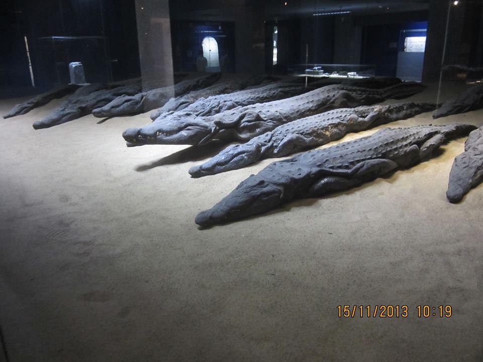 Le Musée de crocodile de Kom Ombo a été ouvert en Février 2012.
