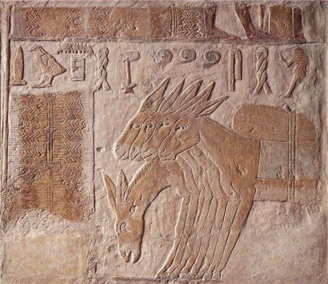Cinq ânes sur cette scène de l'hypogée de l'ancien empire de Metchetchi