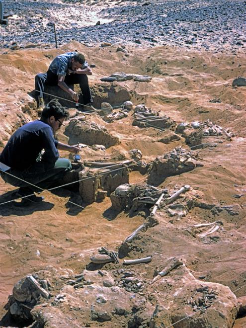 Egypt-conflict-cemetery