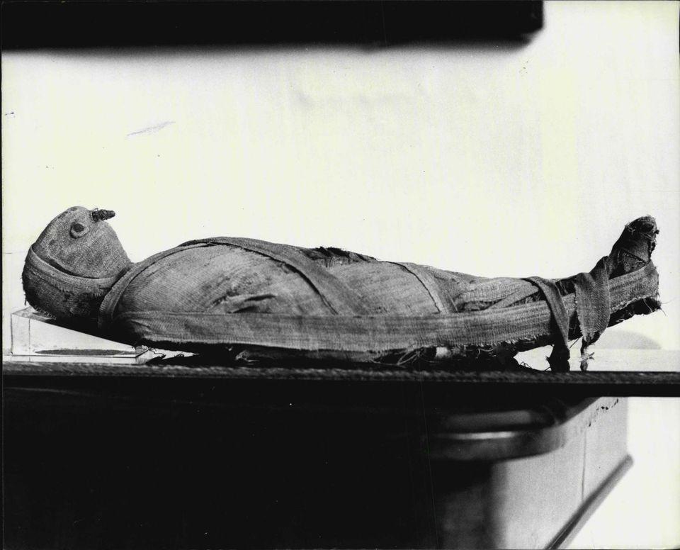 Faucon momifie entre 1 500 et 2 000 B.C.E