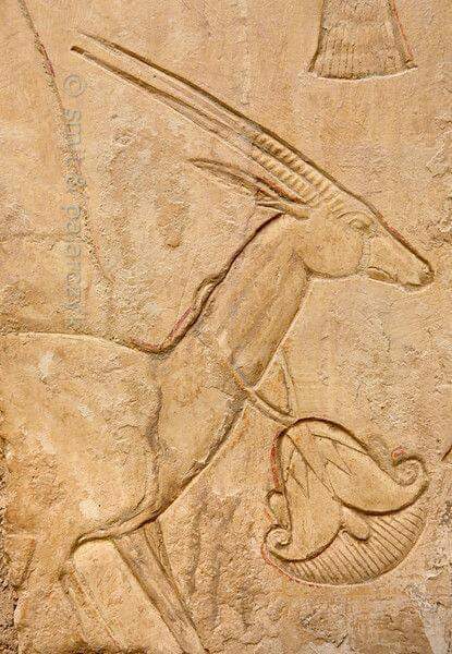 Gazelle in Ankhhor's tomb at Luxor