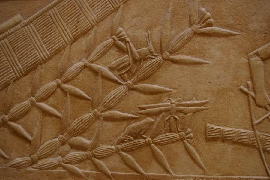 Sous la barque de kagemni en papyrus...