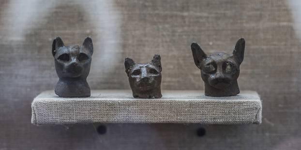 L'Egypte devoile sept tombes avec des chats et des scarabés momifies