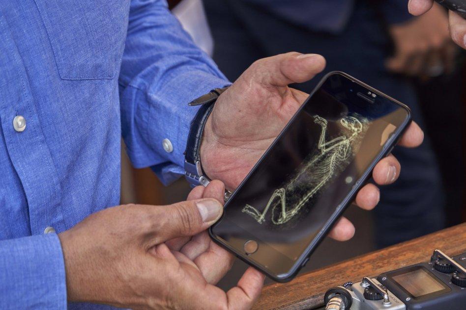 le scanner CAT sur l'une des momies de lionceaux  Photographie de Hamada Elrasam_ AP