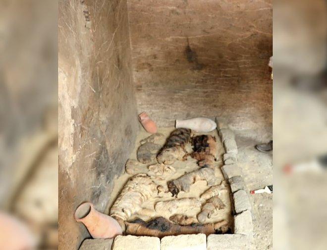 Momies de chats ont été découverts dans le complexe de Saqqarah