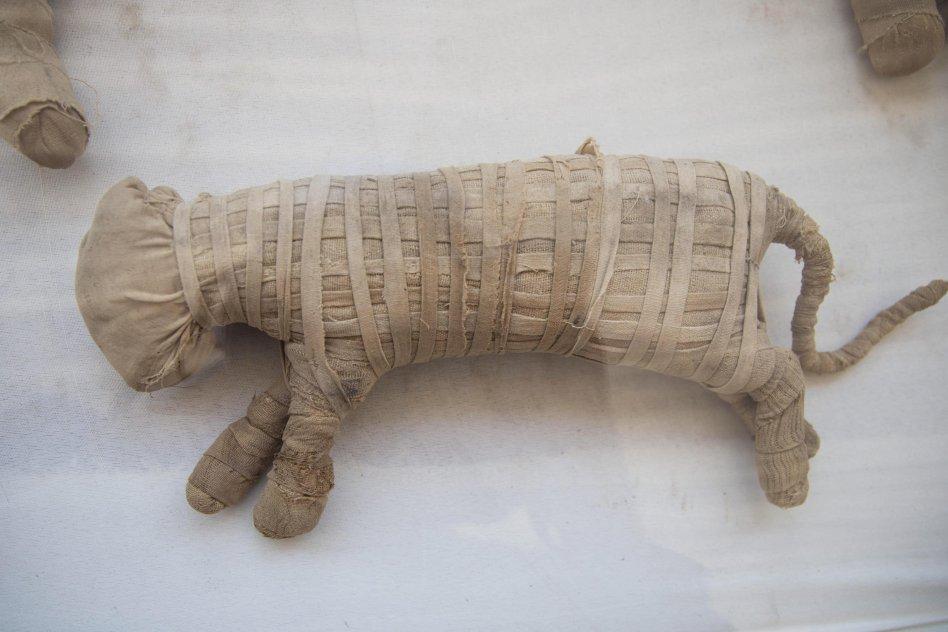 Momie de chat enveloppée dans des bandages en lin Photographie de Mohamed Hossam_ EPA