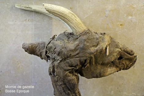 Momie de gazelle exposee au musee d'archeologie mediterraneenne de la ville de marseille