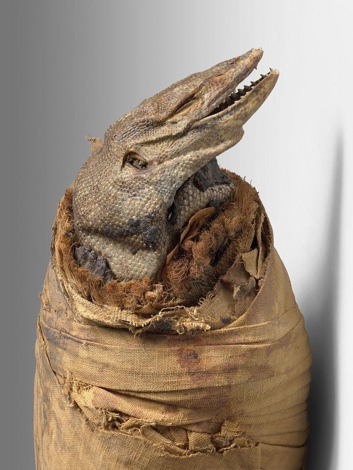Momie de varan du nil basse epoque momie et bandelettes de lin 104 x 17 x 14 cm ancienne collection sallier musee granet 1