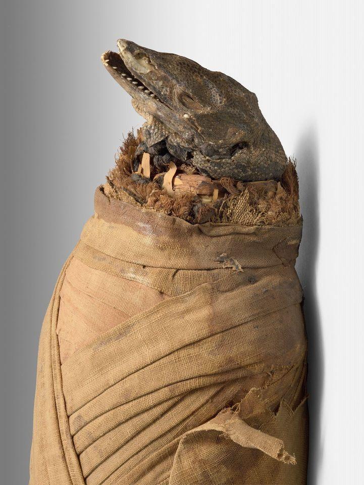 Momie de varan du nil basse epoque momie et bandelettes de lin 104 x 17 x 14 cm ancienne collection sallier musee granet
