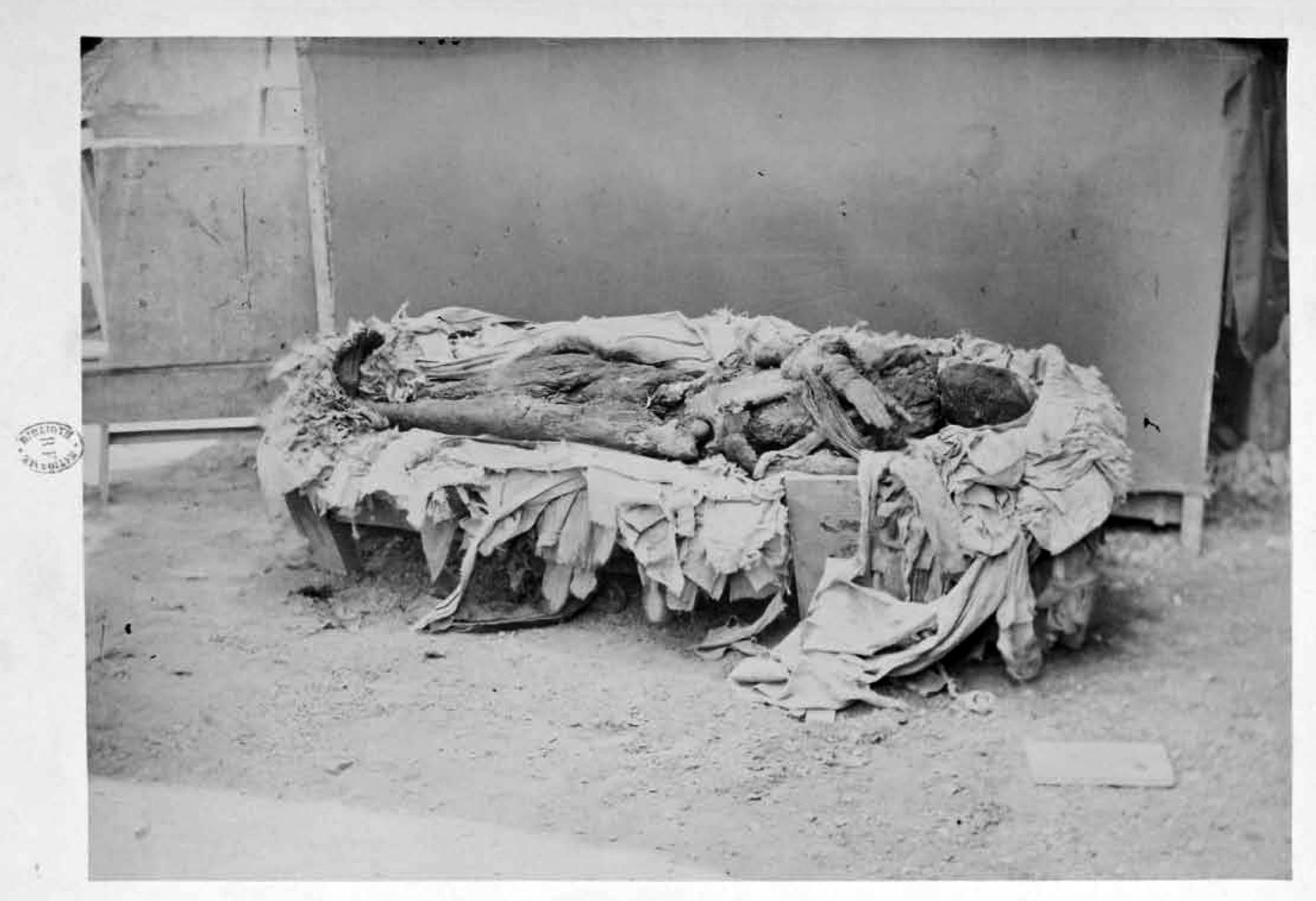 Mummy of thutmose III after unwrapping