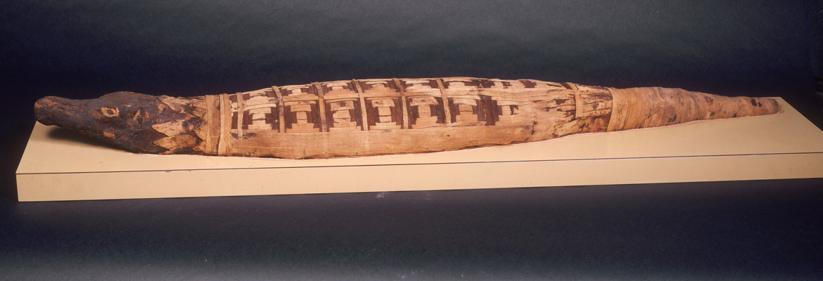 NTD-2500-year-old-mummified-crocodile-yields-surprises-2