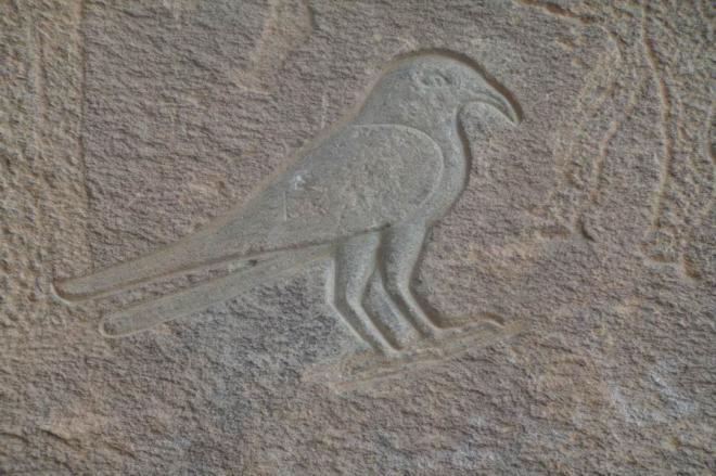 Un bien beau faucon gravé en relief dans le creux...  Wadi Hammamat.