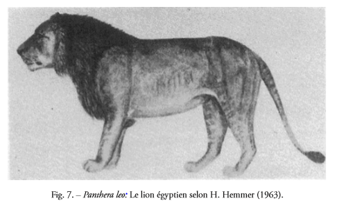 selon H. Hemmer (1963).