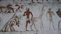 Rekhmire la girafe de Nubie