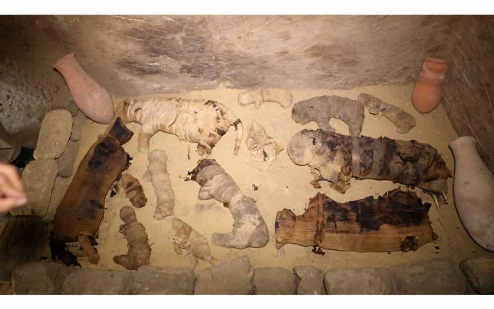Des momies de chats dans le complexe de Saqqarah.