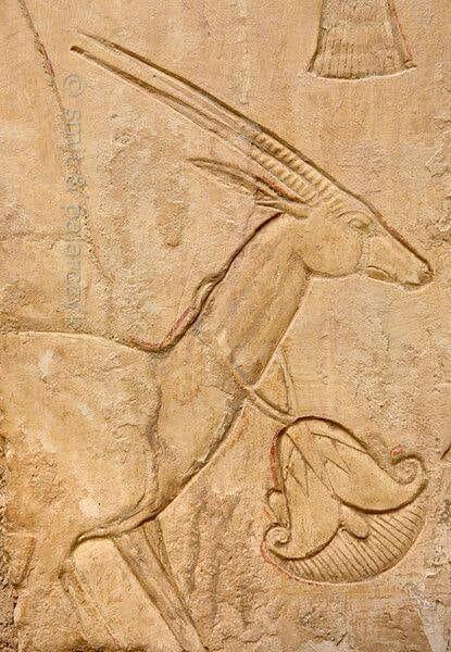 Gazelle du Nil.