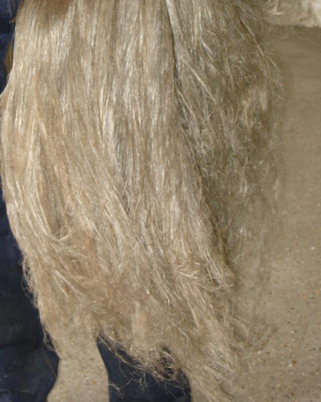 Lin teille fibres longues extrait des pailles