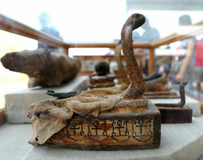 Momie de cobra à Saqqarah avec des scarabées et des chats