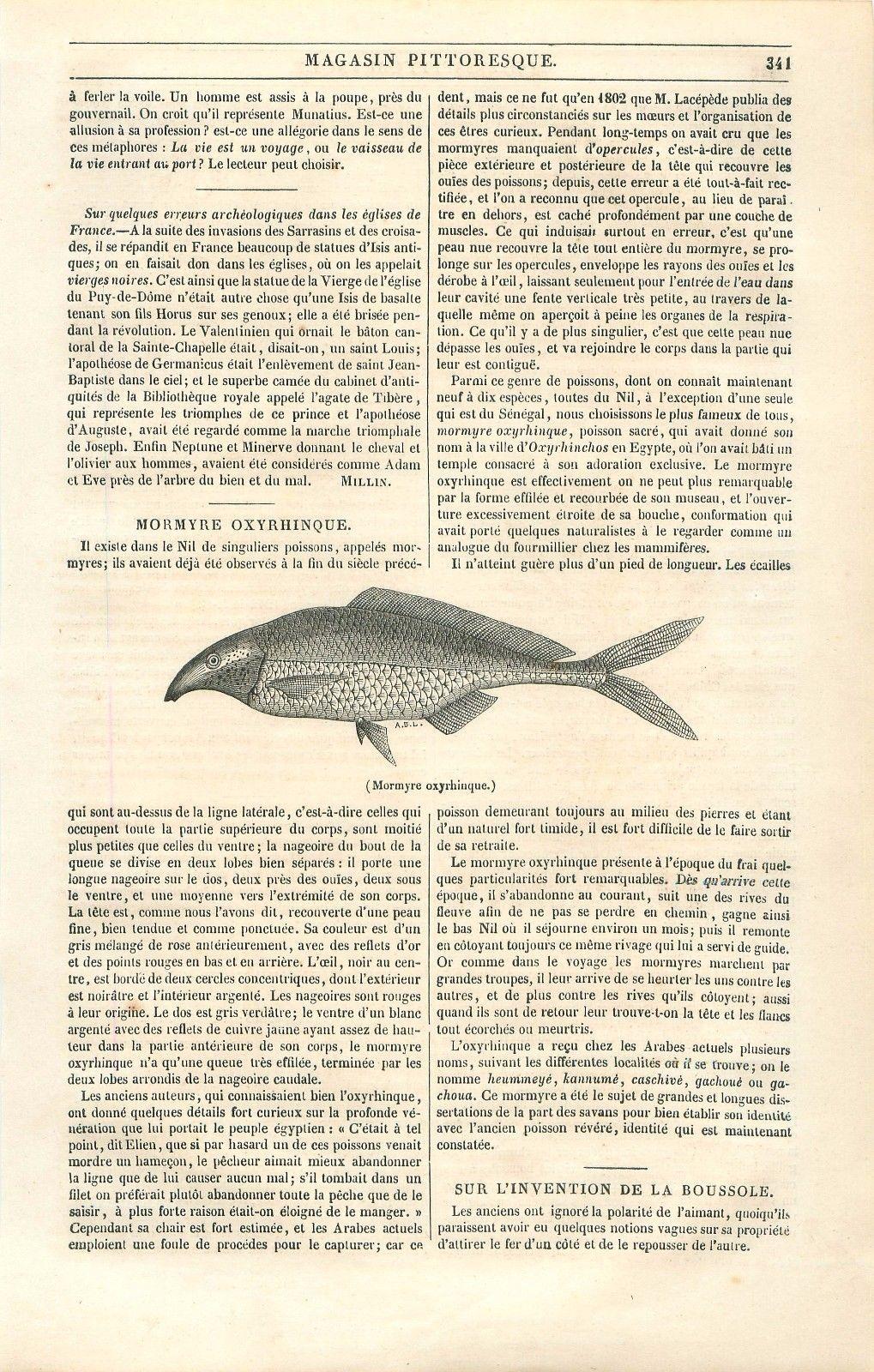 Mormyre oxyrhinque campylomormyrus poisson nil egypte gravure antique