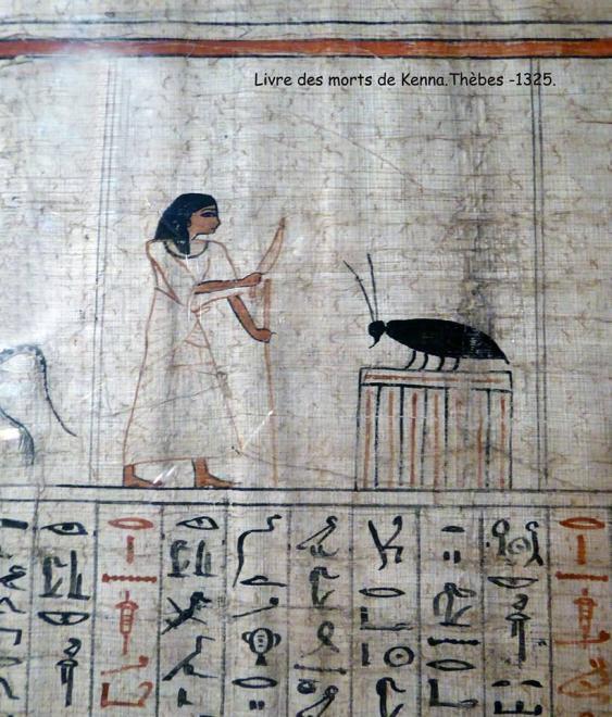 Sauterelle, du Nil.