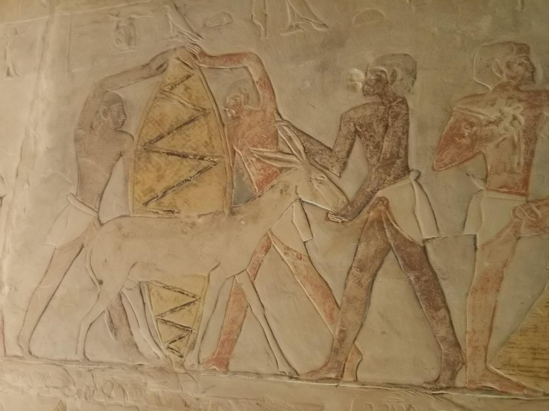 Ânes en Égypte ancienne.