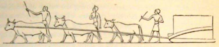Transport d une pierre de taille a l aide de b ufs carrieres de ma asara 18e dynastie sir john gardner wilkinson wikipedia