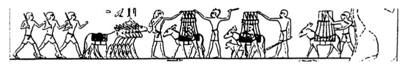 Transport des recoltes tombe de khounes a zawiet el meitin
