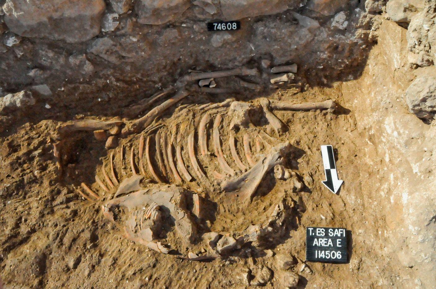 Un ane sacrifie dans le rituel cananeen trouve in situ a tell es safi gath l analyse de ses dents a montre qu il est ne et a ete eleve dans l egypte ancienne