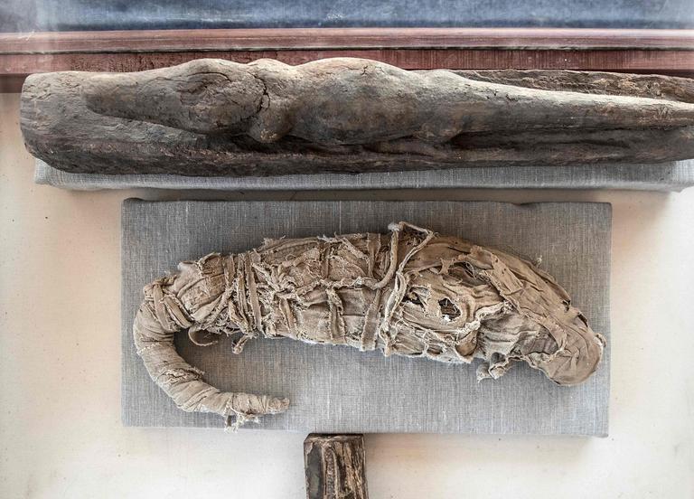 Une momie de crocodile retrouvee a saqqarah 23112019 khaled desouki afp